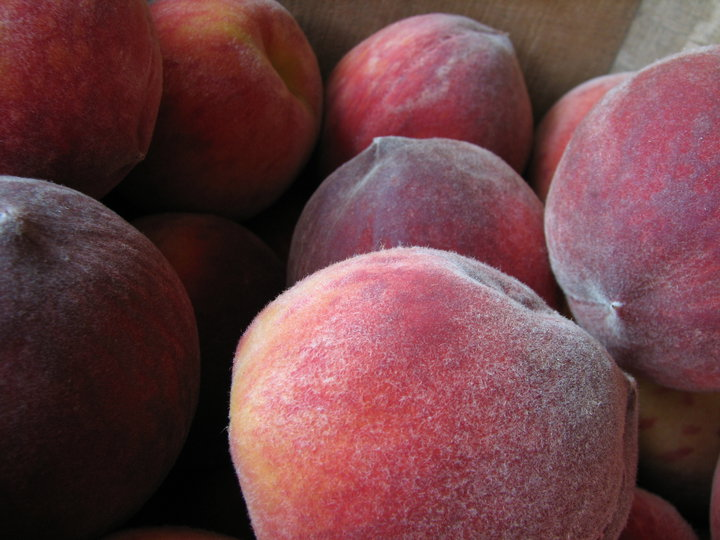 Peaches at Toigo Orchard