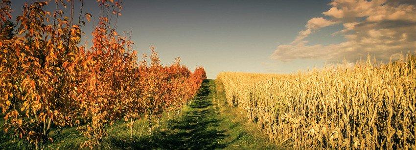 Toigo Orchards in Shippensburg, PA