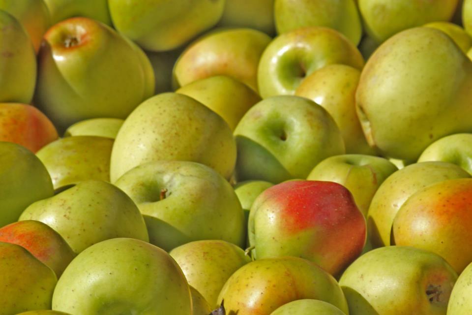 Apples at Toigo Orchards near Shippensburg, PA